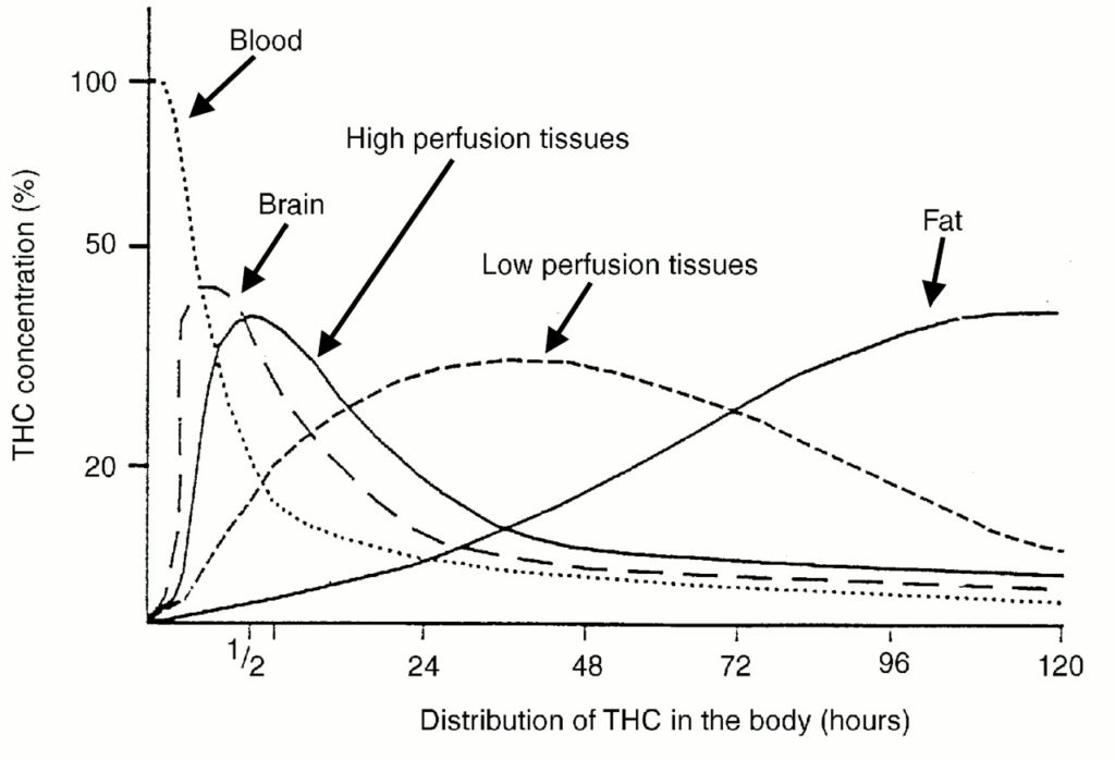 Human Metabolism of THC \u2013 Sapiensoup Blog