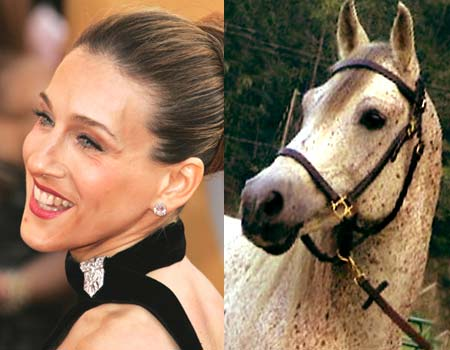 wtf cool stuff the best meme funny pics animals funny pics  Site of the day: SJP looks like a horse (pics)