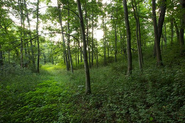 summer-woods1