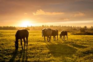horse equine real estate