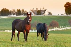 equine real estate