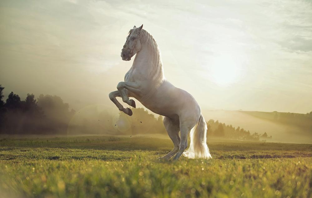 Stallion Stall