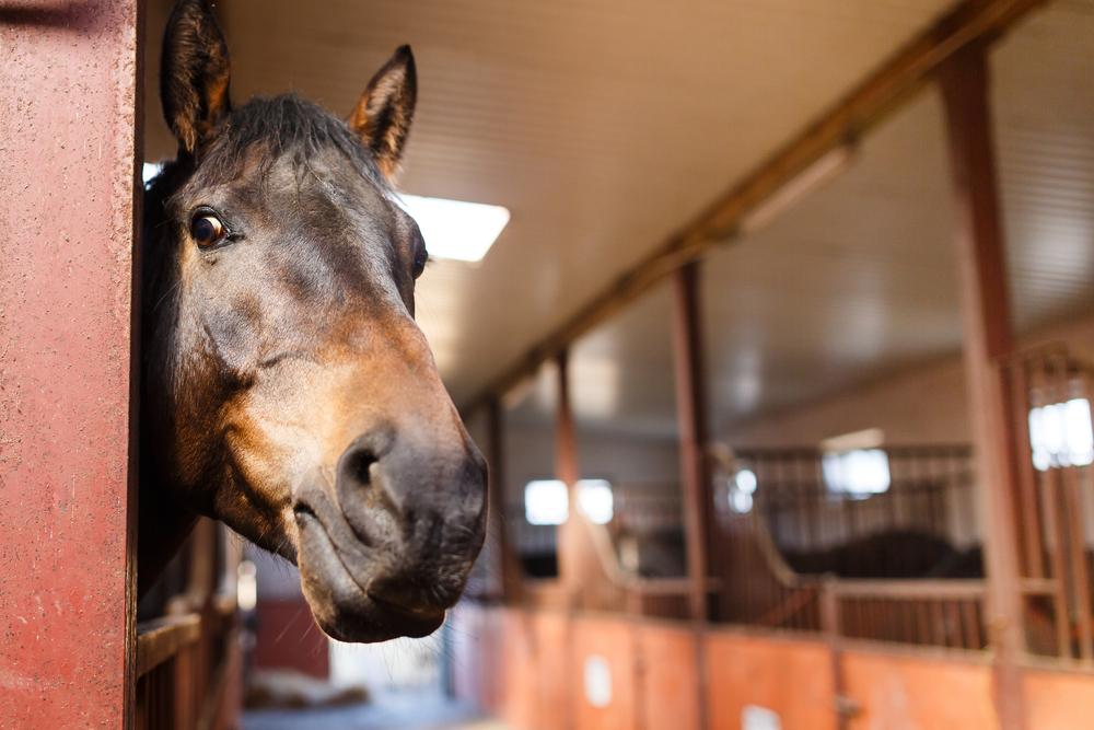 horse barn renovations