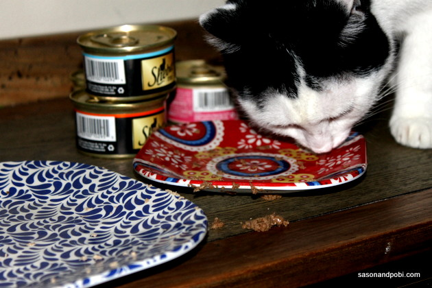 #shop #ShebaCat Licking The Plate Clean