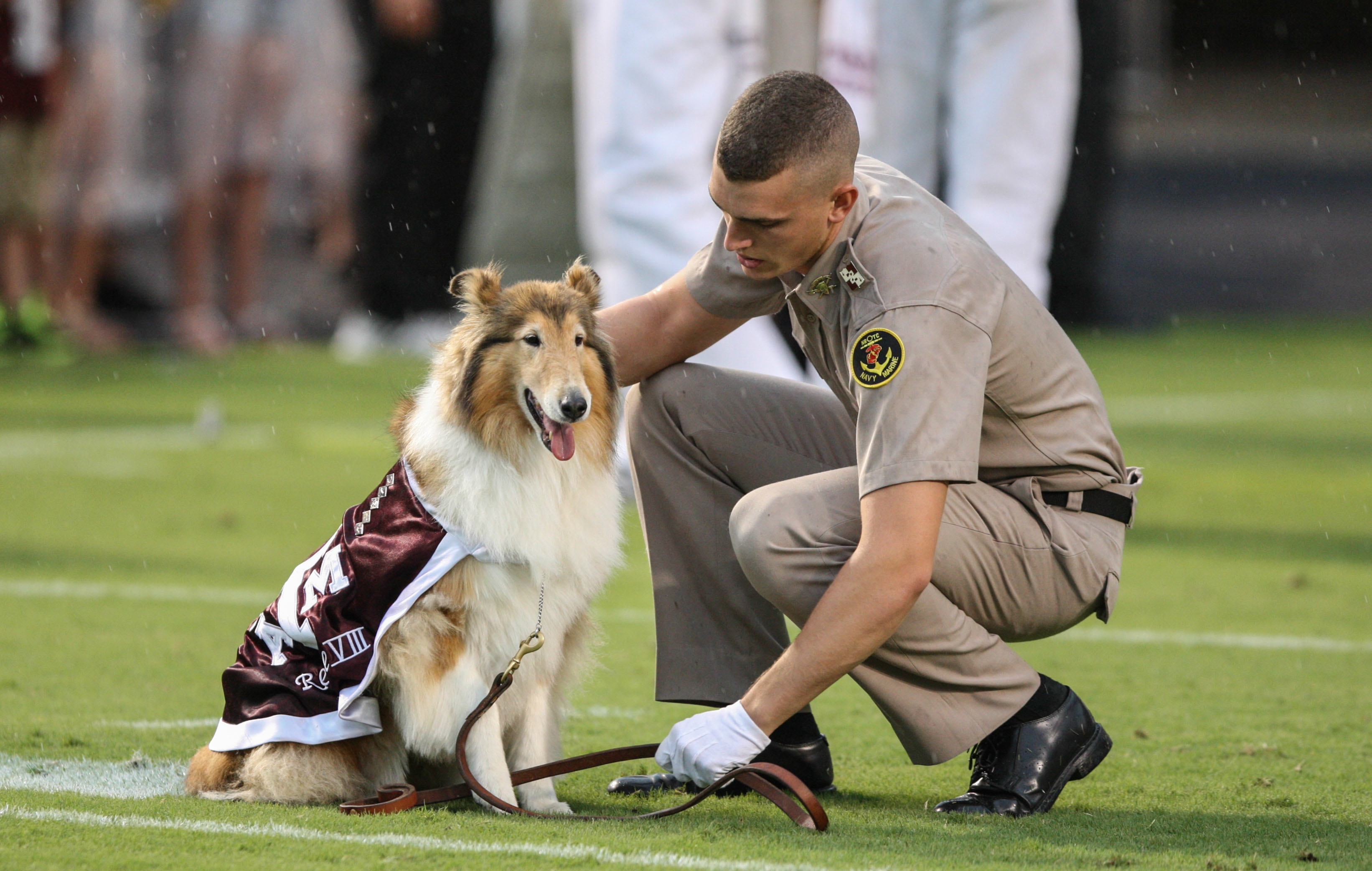 Reveill Photo Reveille Sends Flowers In Memory Of Mike The Tiger