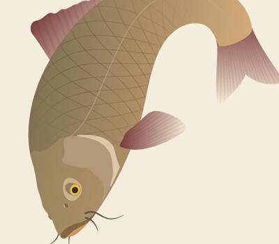 traditional japanese koi carp 80 Excellent Adobe Illustrator Cartoon Tutorials