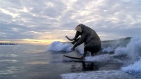 surfing-elephant
