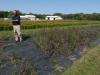 Так высаживают прерийные растения в Центре производства семян