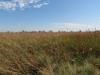 Искусственно заливаемый восстановленный травостой из растений высокотравной прерии (доминируют Sorghastrum nutans и Andropogon gerardi)