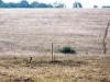 Сурок у норы. Центрально-Черноземный заповедник. Фото О.В. Брандлера