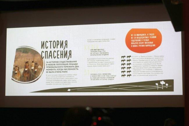 На презентации фильма о программе реинтродукции лошади Пржевальского в Оренбургском заповеднике, Москва, 12.12.2016. Фото предоставлено пресс-службой ФГБУ «Заповедники Оренбуржья»