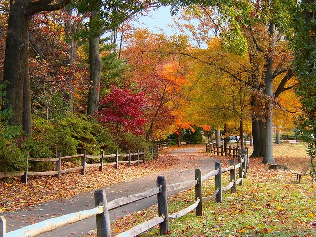 Central Park In Fall Wallpaper Sweater Weather Pretending It S Fall Makes Me Happier