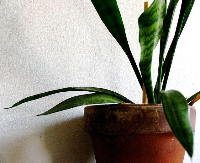 The best indoor houseplants to improve air quality for Indoor plants for better air quality