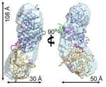 The p38alpha:HePTP enzyme complex, shown in two views rotated 90 degrees