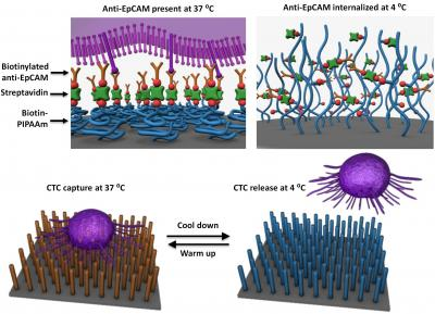Tiny device that can capture circulating tumor cells (Credit - RIKEN)