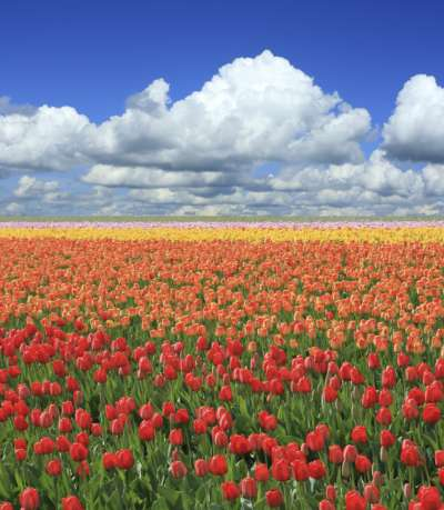 Spring Desktop Wallpapers | Ever Cool Desktop Wallpaper