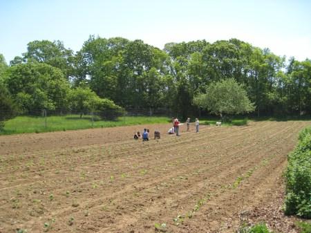 Quail Farm Amagansett