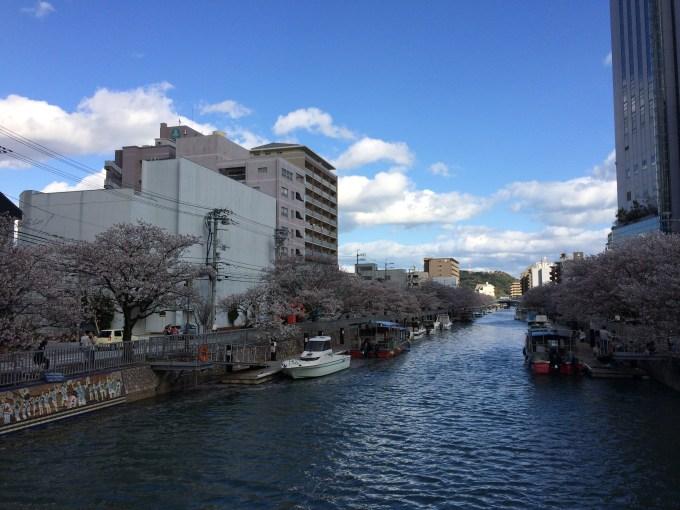 堀川桜IMG_0513