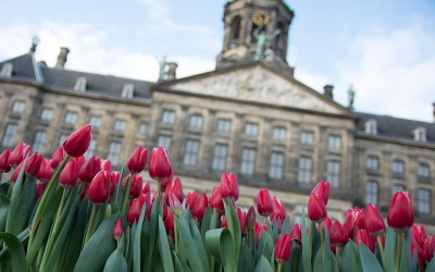 Tulips are displayed in Dam Square in front of the Royal Place. C/O Joseph Ryder