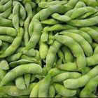 2017 New Crop Good Tasting Fresh Frozen Soybean