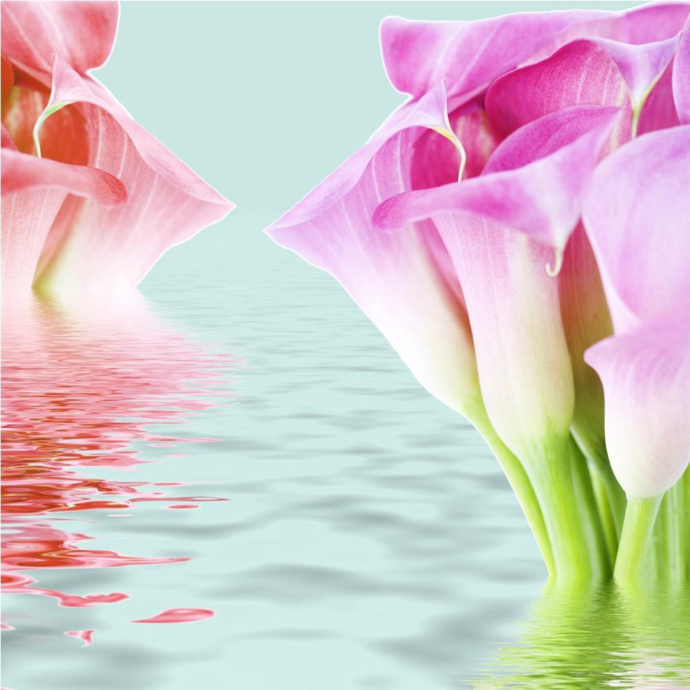 Wallpaper 3d Buat Android Gambar Bunga Untuk Wallpaper Hp Gudang Wallpaper