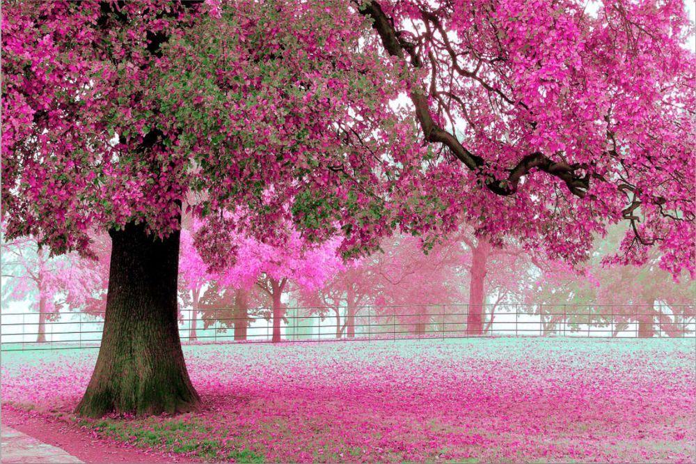 How To Choose 3d Wallpapers Printer Wholesale 3d 012 Giant Sakura Tree Romantic Simple Scenery