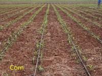 Farm Irrigation System Design Agri Fruit Farming Drip ...