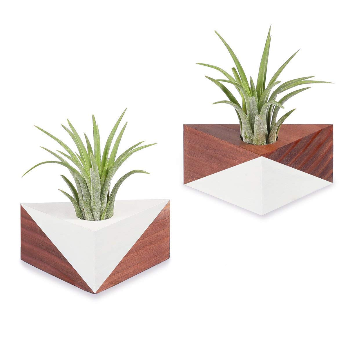 Air Plant Wall Holder Cheap Hanging Air Plants Find Hanging Air Plants Deals On Line At
