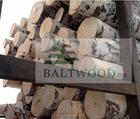 White birch logs, Baltic Birch logs, Latvia Birch logs