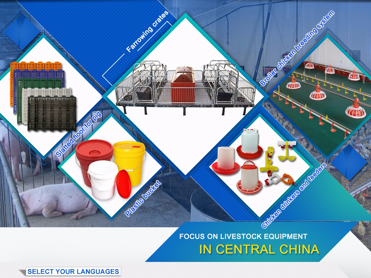 Lattenroste Fiberglas Zhengzhou Sihai Breeding Equipment Co Ltd Chicken Farming