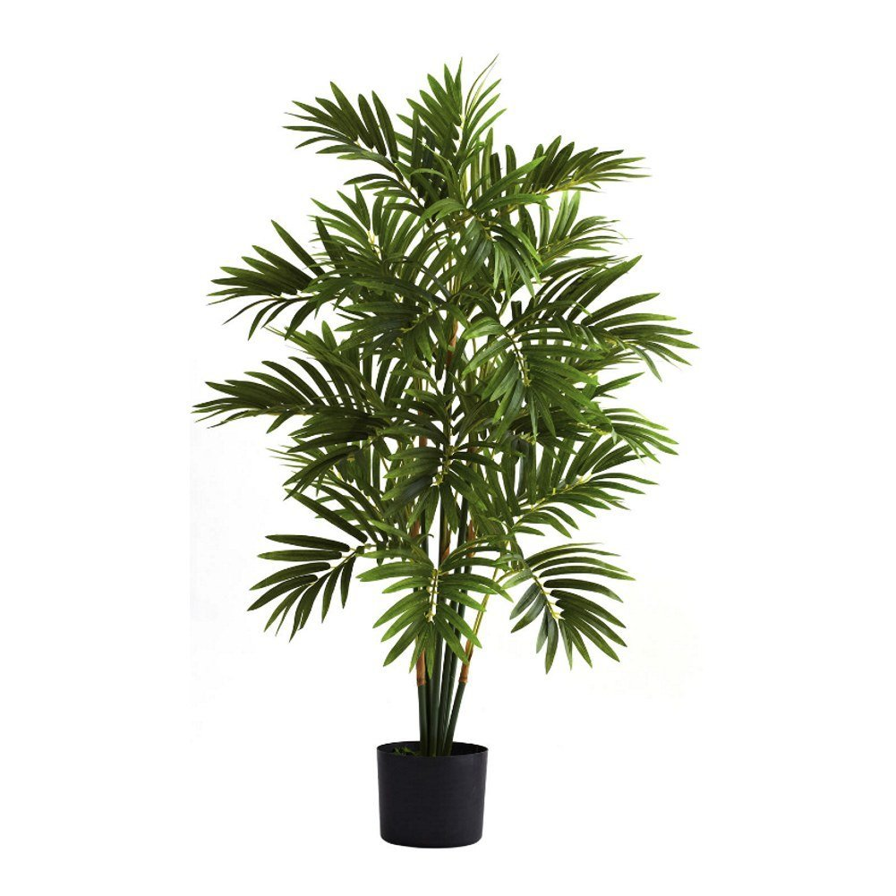 Butterfly Palm Madagascar Palm Areca Palm Chrysalidocarpus Cheap Areca Palm Care Find Areca Palm Care Deals On Line At