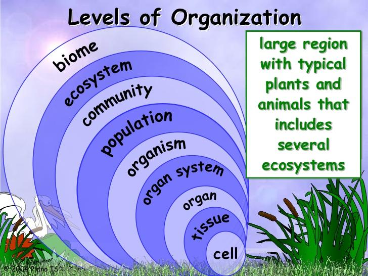 7L3B1 Levels of Organization