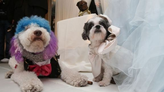 Were you invited to the worlds most expensive pet dog wedding yesterday?