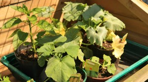 10 Foolproof Vegetables for Container Gardening