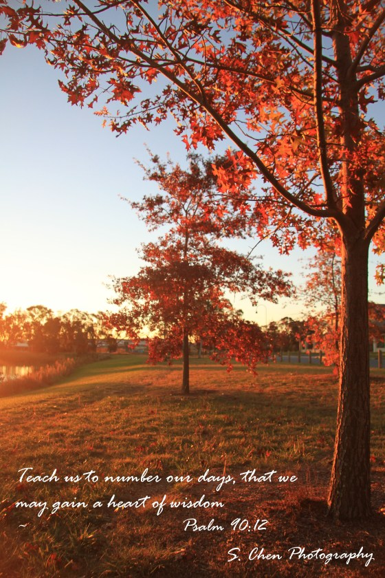Free Fall Scripture Wallpaper Days S Chen Photography