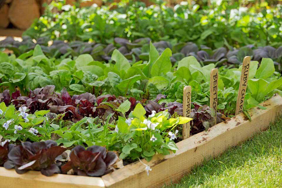 Garden Design Garden Design with Sustainable Gardening Australia - sustainable garden design