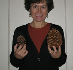 5_pinecones