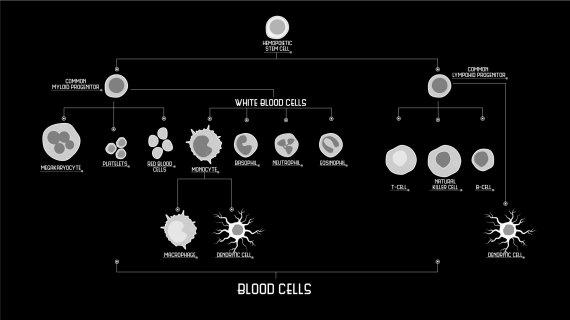 Series Collaboration - Stem Cells Inked Episode 1