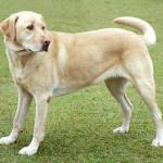 Dogs read our communication cues