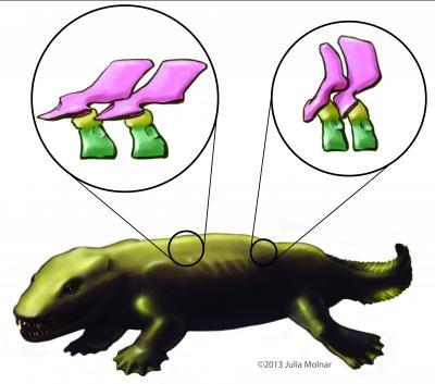 tetrapod vertebrae