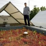 Green roofing brings considerable thermal advantages in places with mild winters and hot summers