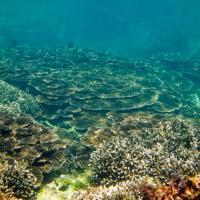 Global warming could change strength of El Niño