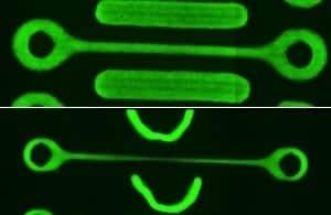 Researchers Develop a Dynamic Model of Tissue Failure