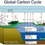 Ocean food web is key in the global carbon cycle