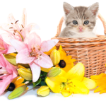 Keep Lilies Away From Your Cats