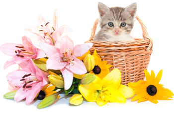 FDA Says Keep Lilies Away From Your Cats