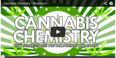 Video: How scientists test marijuana for potency and safety