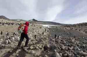 crozier-researcher-penguins-cool-sky