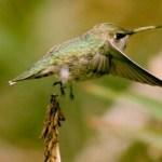 14123-birds_banner