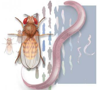 Scientists looking across human, fly and worm genomes find shared biology